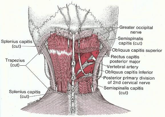 spända muskler i nacken